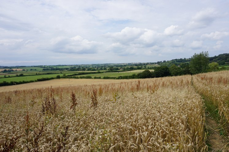 Hay field with views of the Cotswold valley during the Dyrham to Doyton walk near Bath