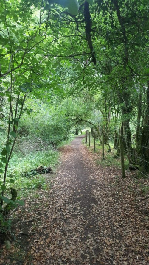 Forest path along the Wysis Way near Stroud